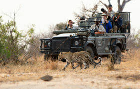 Nkoveni Leopard And Cub Land Rover