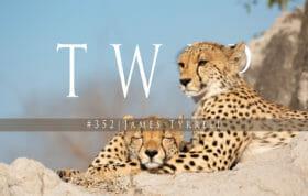 Twip 352 2