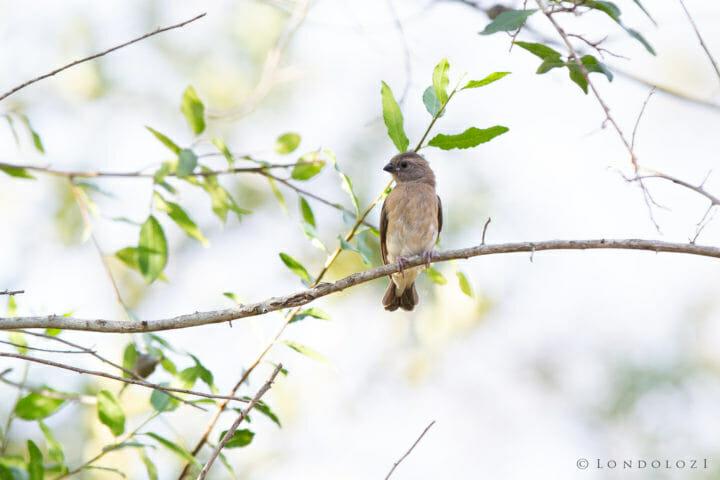 Mystery Bird 2 2