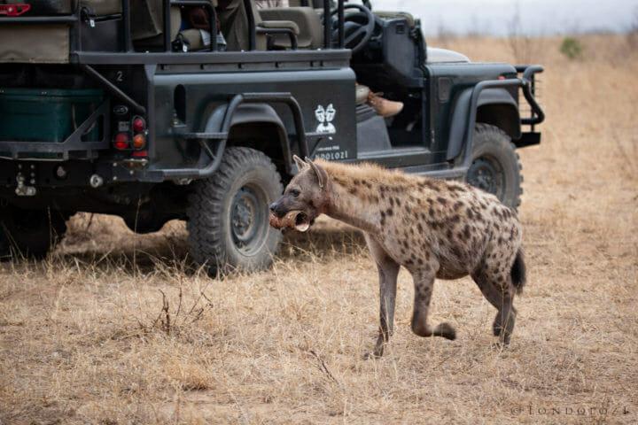 Hyena Land Rover
