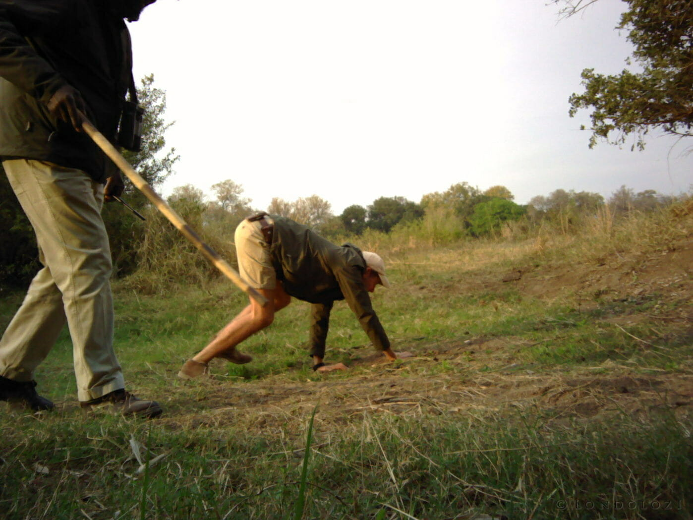 A Londolozi ranger looks at animal tracks while on all fours is caught on a camera trap