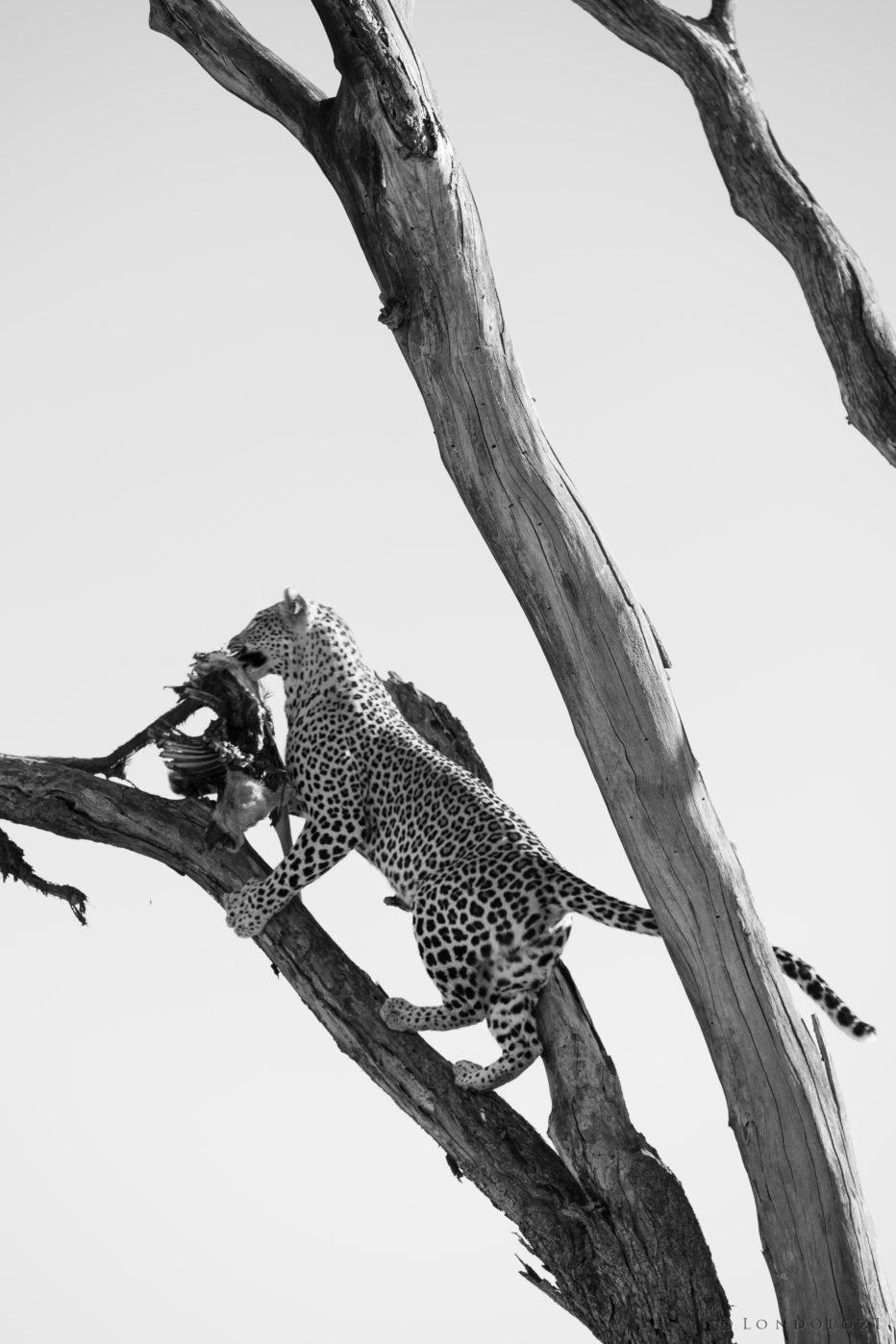 Mashaba Leopard 3
