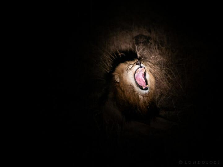 A Nightime Yawn