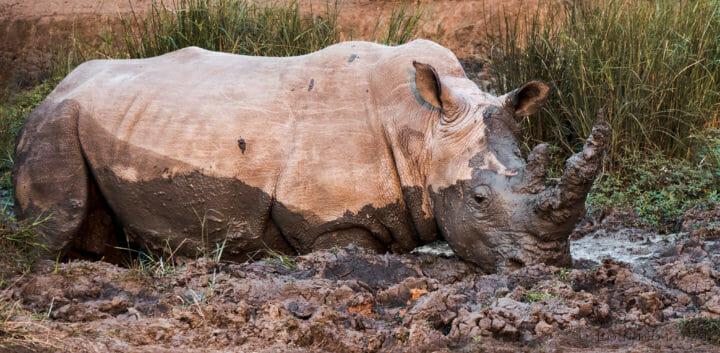 A Rhino Spa Visit