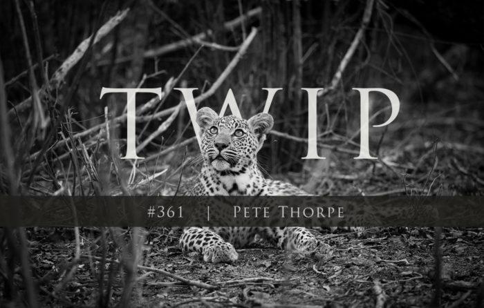 361 Twip Temp