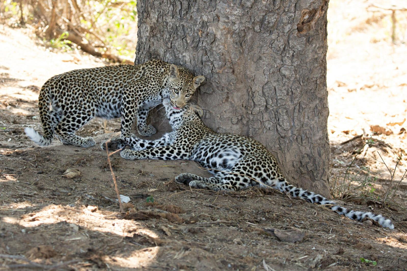 Nhlanguleni Leopard Cubs 2