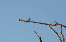 Mystery Bird 5