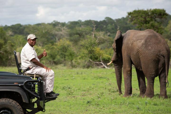 Life Sibuye Elephant