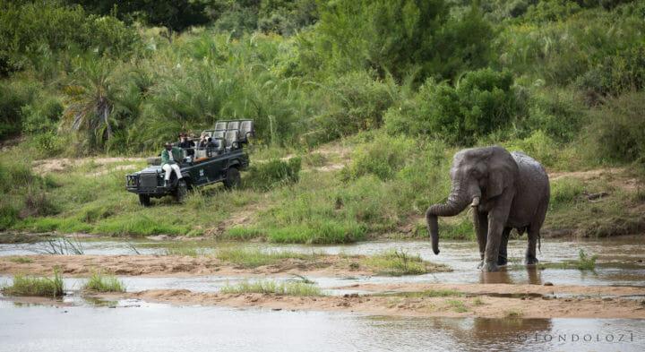 Elephant Land Rover River