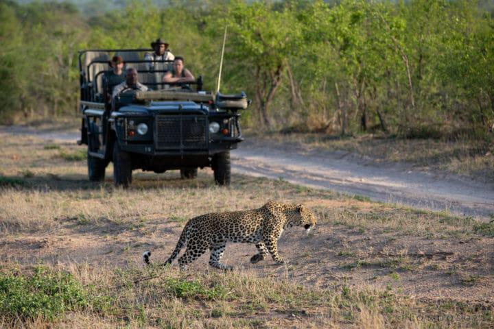 Sandros Nkoveni Female Leopard Land Rover