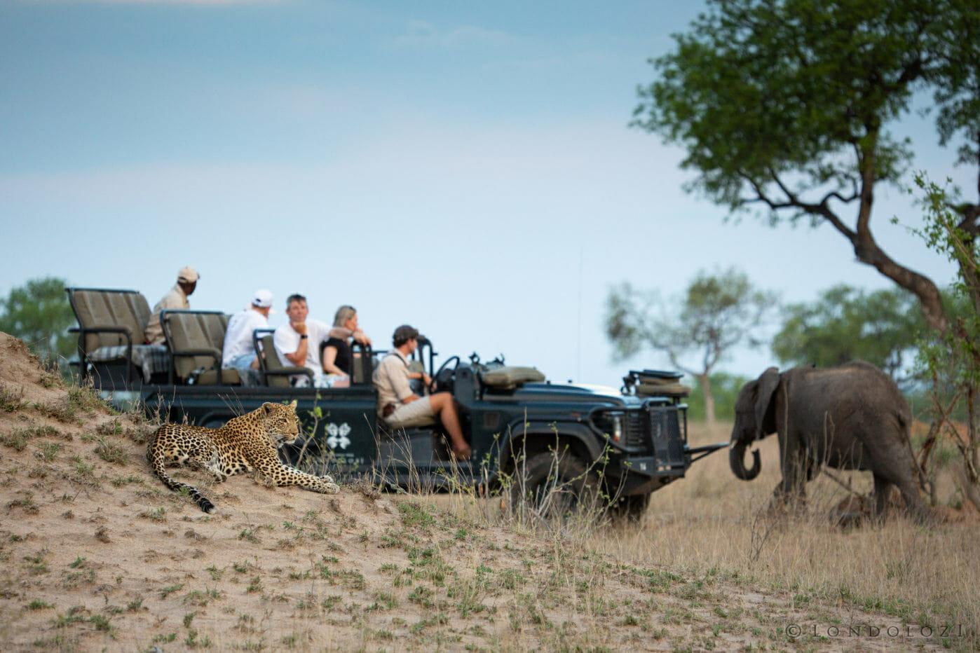 Nhlanguleni Elephant