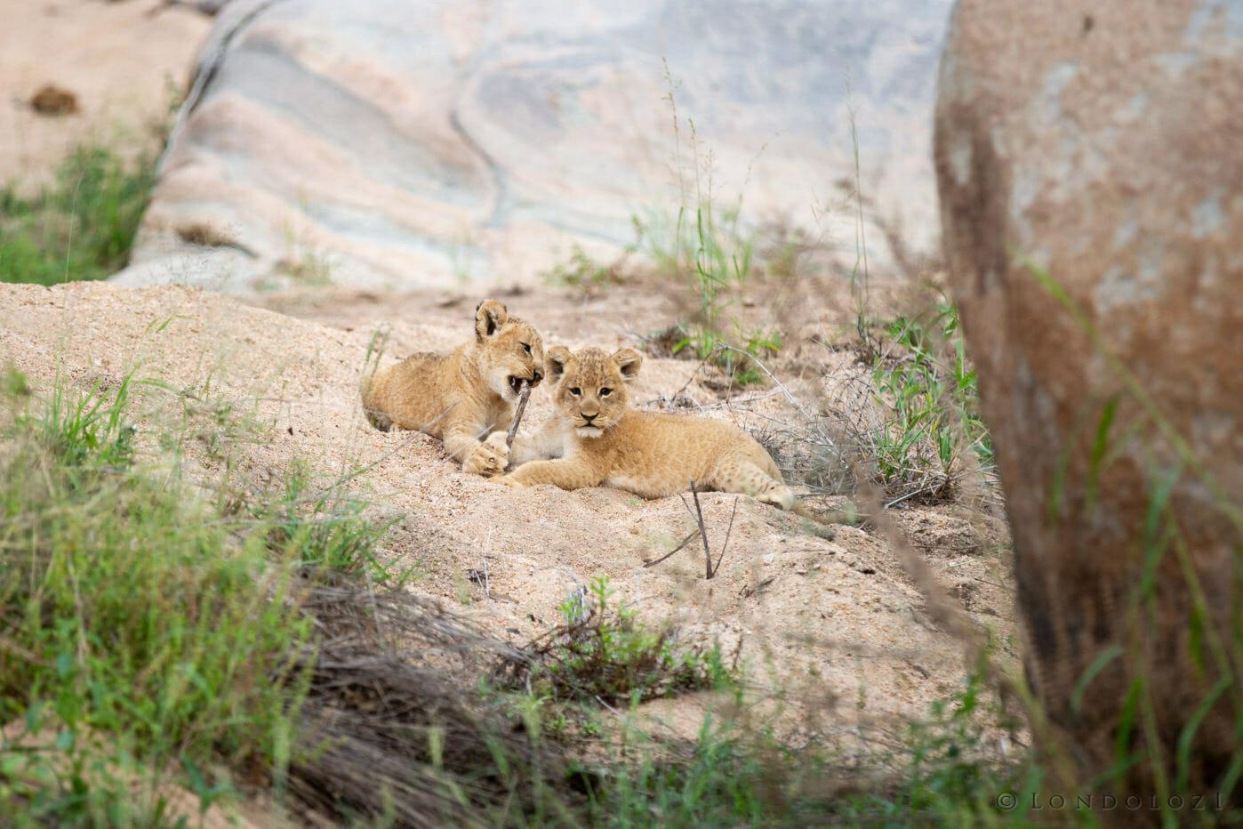 Tsalala Cubs 2016