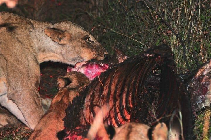 Buffalo Kill