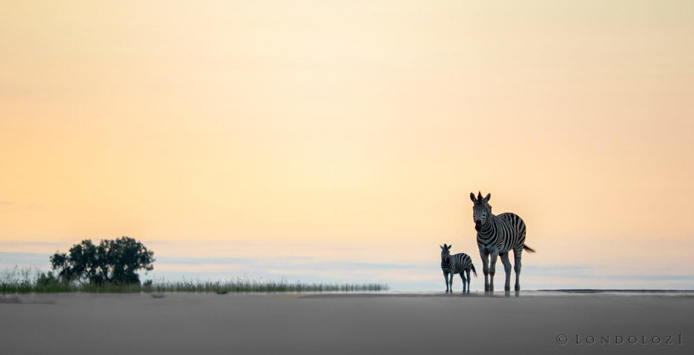 Zebras Airstrip