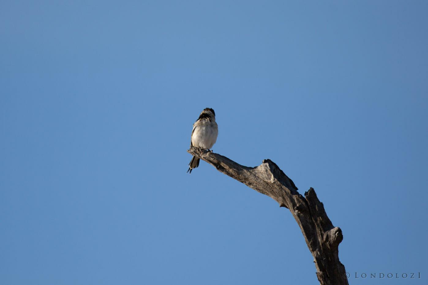 Mystery Bird 8