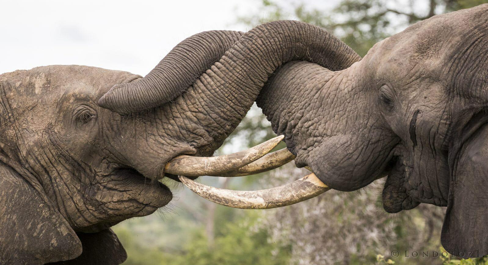 Elephant Interaction 3