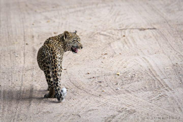Unknown Cub 3