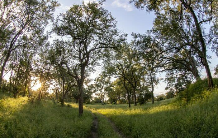 Leadwood Forest