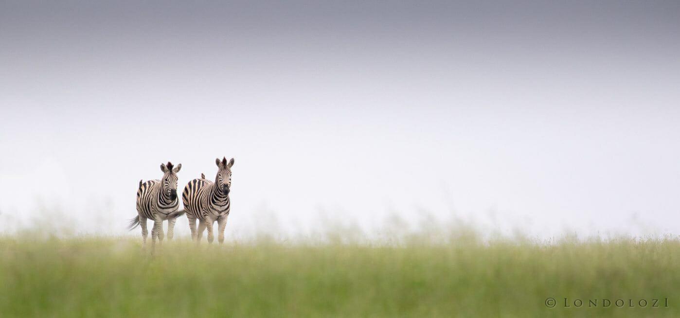 Zebra Airstrip