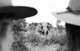 Lg Elephant1