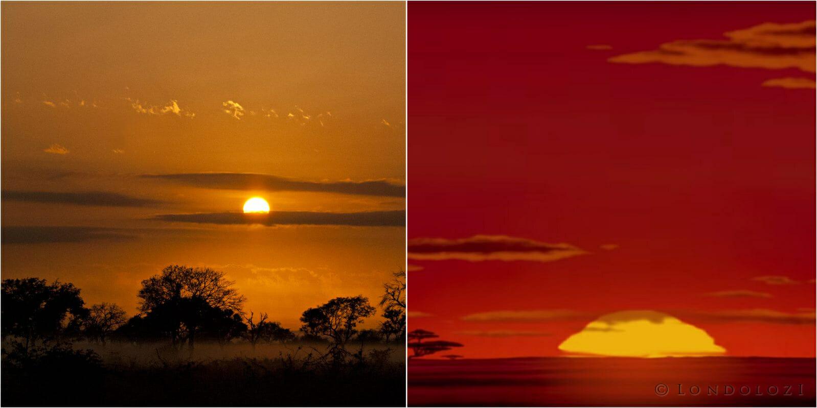 Was The Lion King Set At Londolozi Londolozi Blog