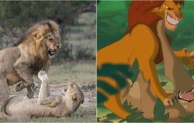 Lionking8