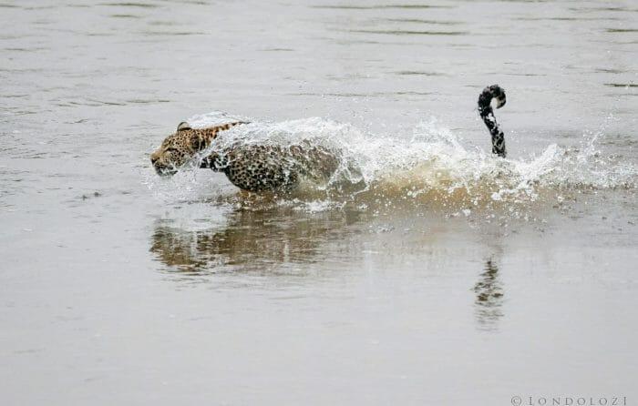 Nhlanguleni Leopad Cub River 3