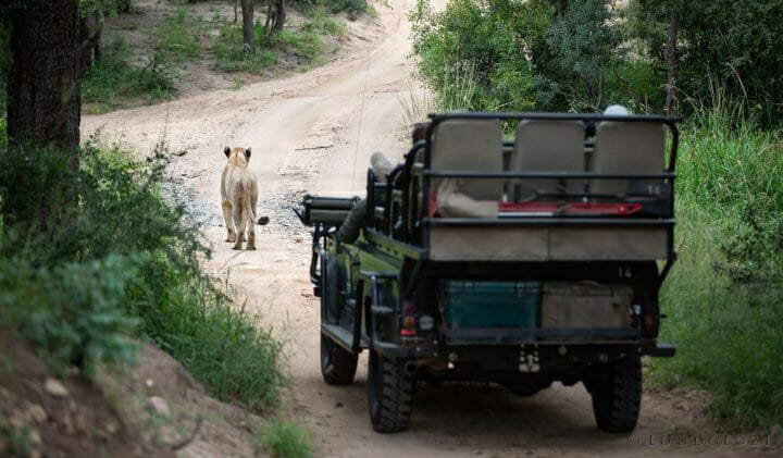 Ntsevu Lioness Land Rover