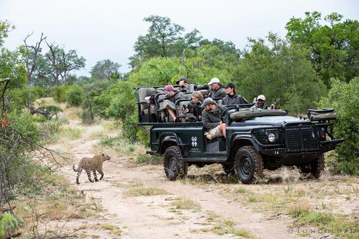 Souchon Guests Land Rover Ndzanzeni Leopard