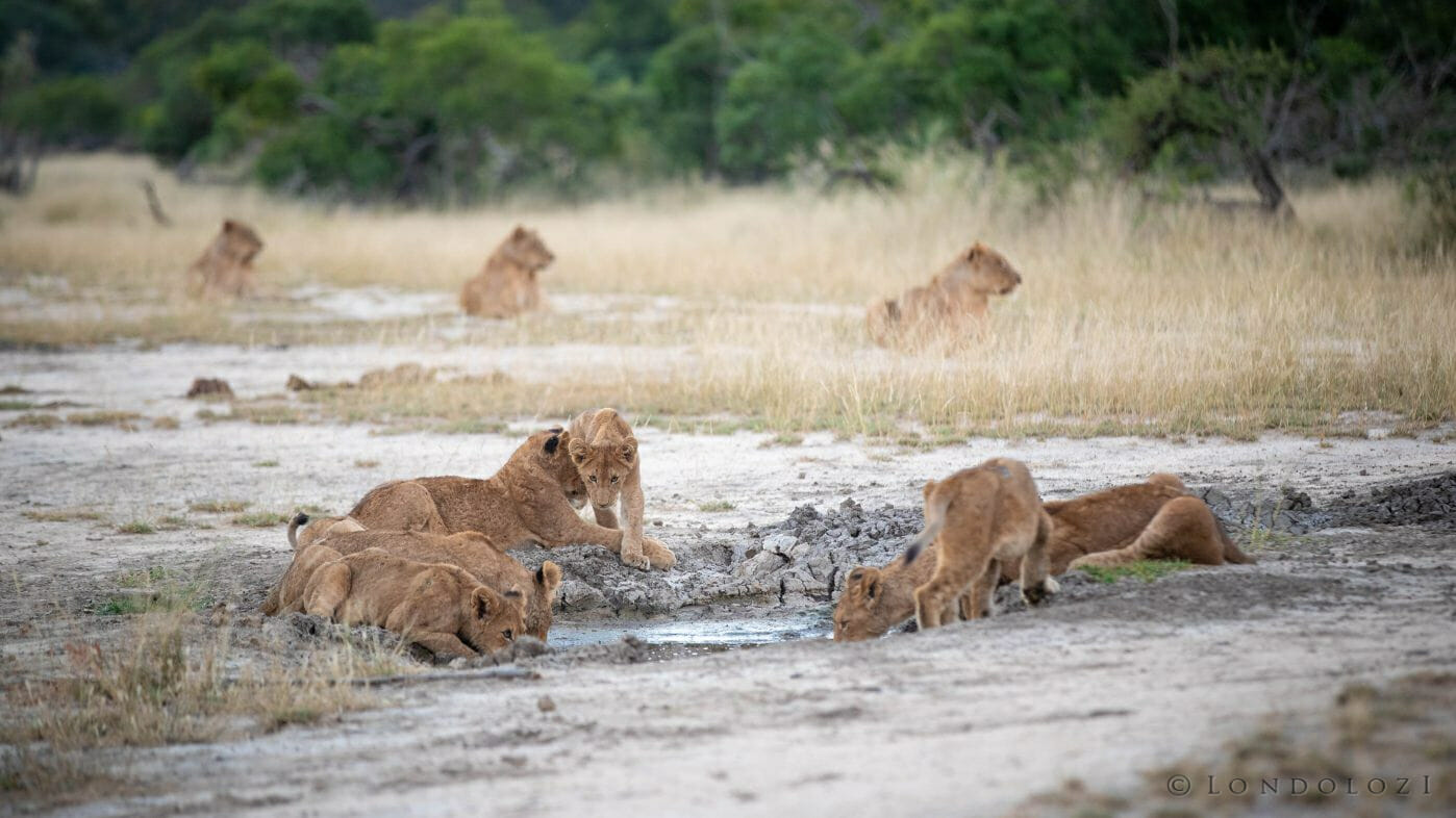 Ntsevu Cubs Drink