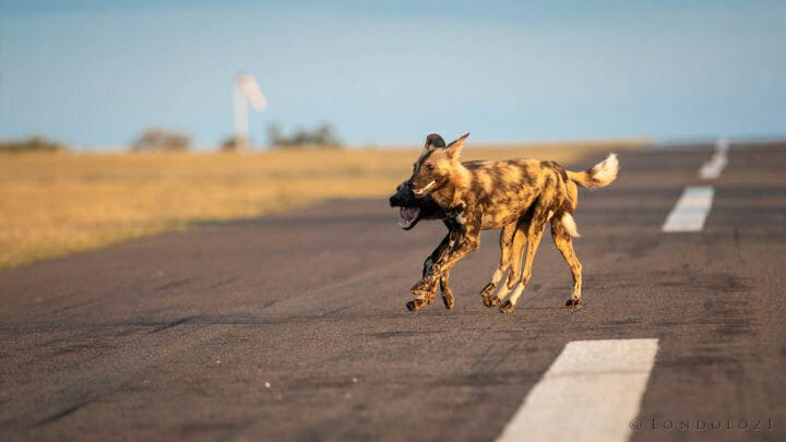 Wild Dogs Airstrip