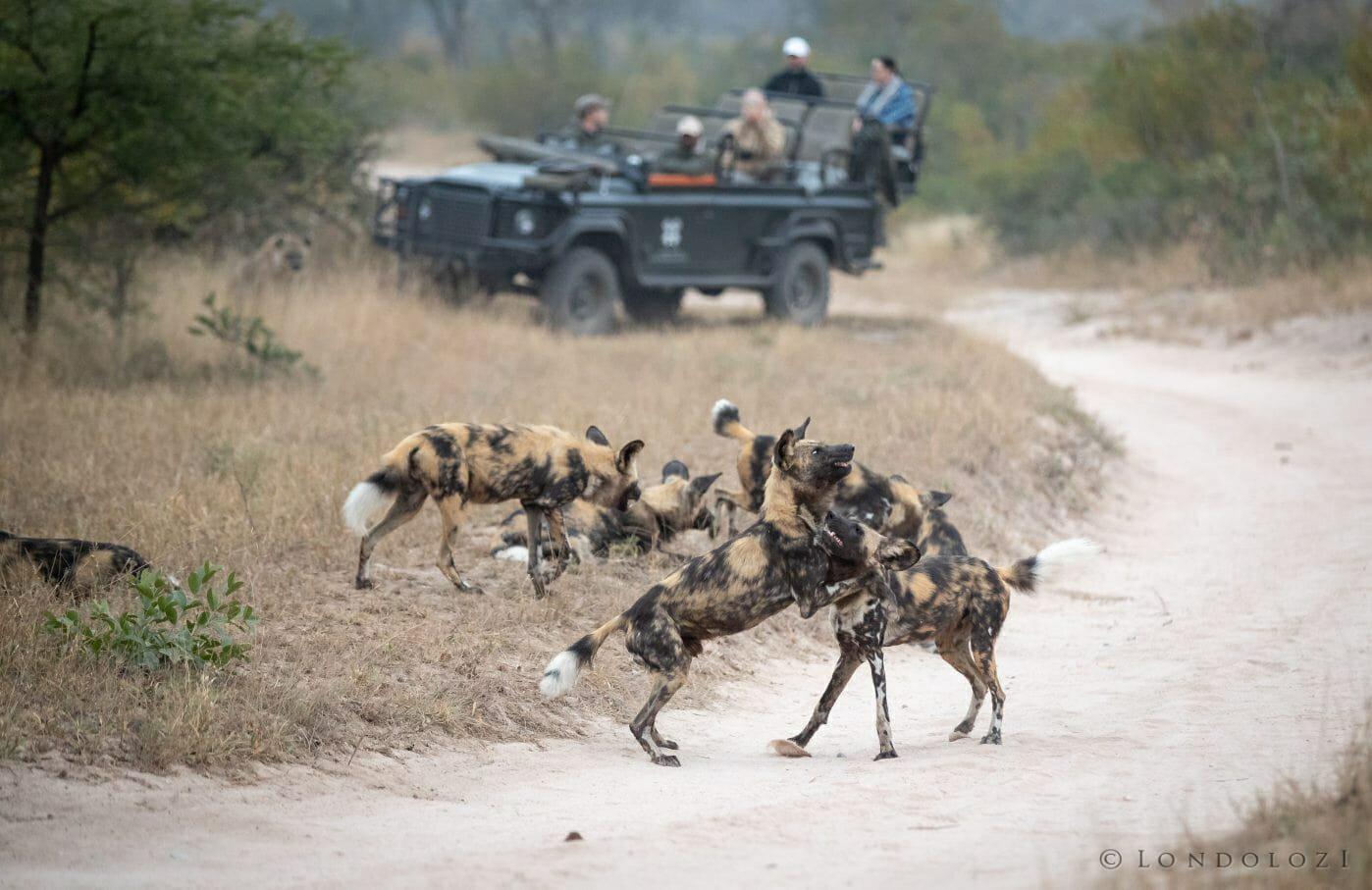 Wild Dog Land Rover Fin