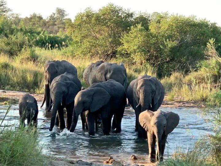 Ellies In Twilight River From Sandee Iphone Video
