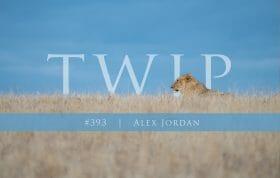 Twip 393