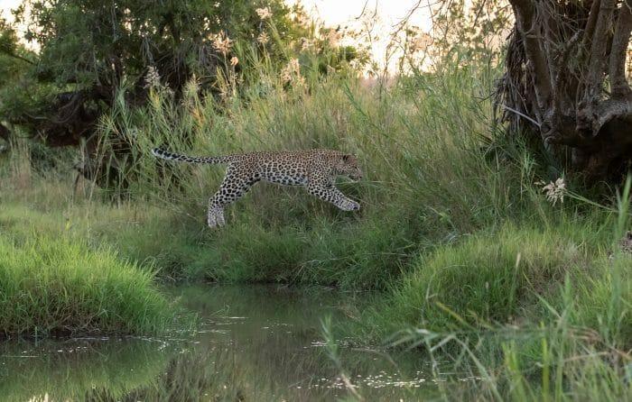 Nkoveni Leopard Leap River 4