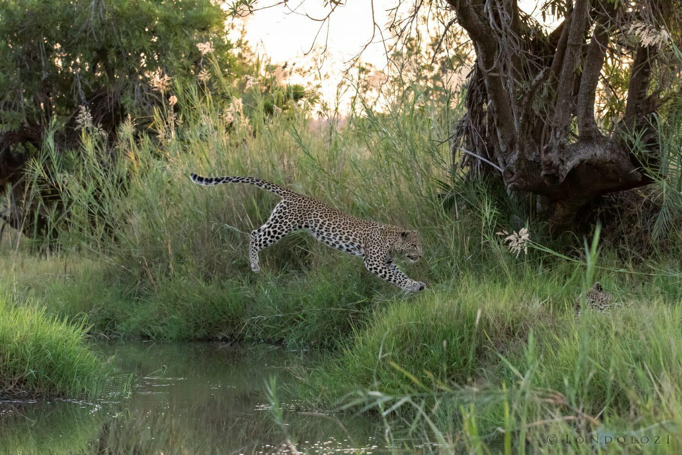 Nkoveni Leopard Leap River 6