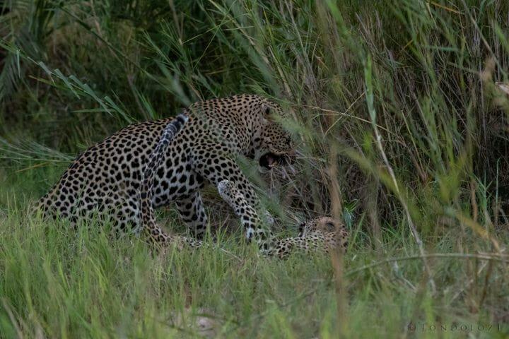 Nkoveni Leopard Leap River 7