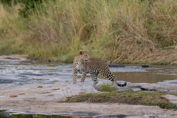 Nkoveni Leopard Leap River 9