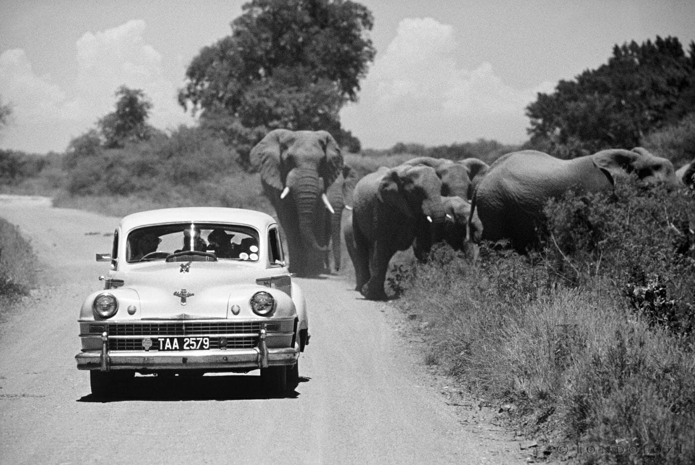 1960 Elephant Viewing In The Fifties