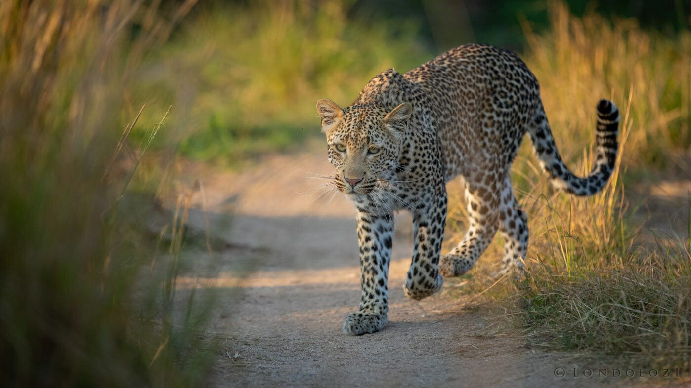 Nhlanguleni Young Female
