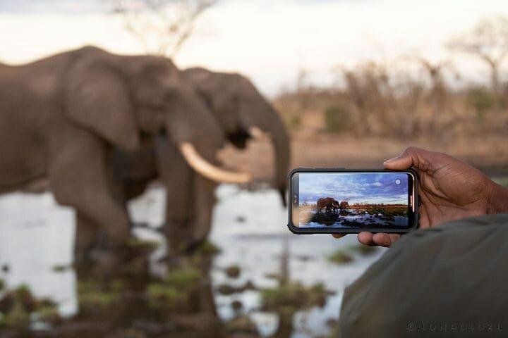 Elephants Drink Phone
