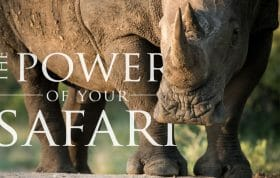 Vimeo Cover Power Safari