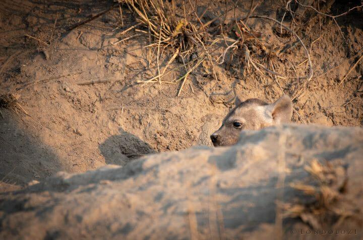 Hyena Cub Peaks