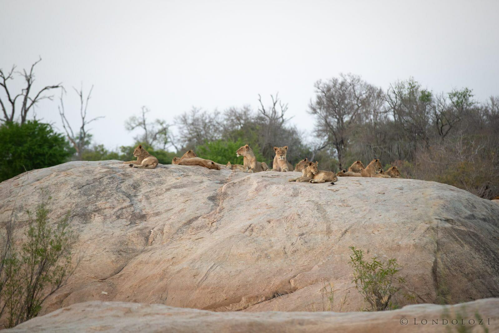Ntsevu Lions Rock