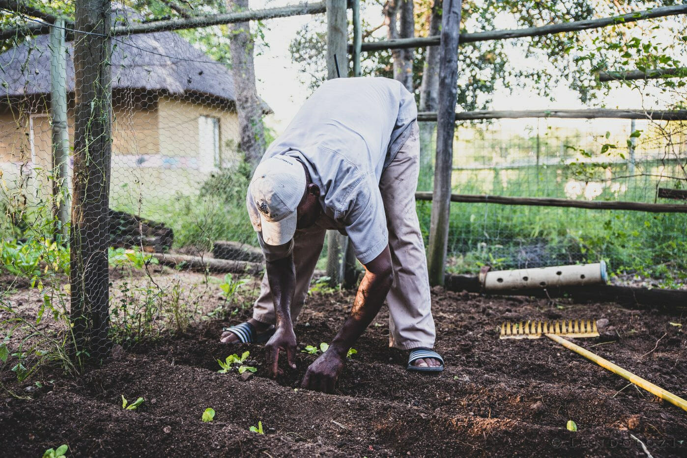 Frank Ubisi Veggie Gardens March 2019 A Ritchie 6962