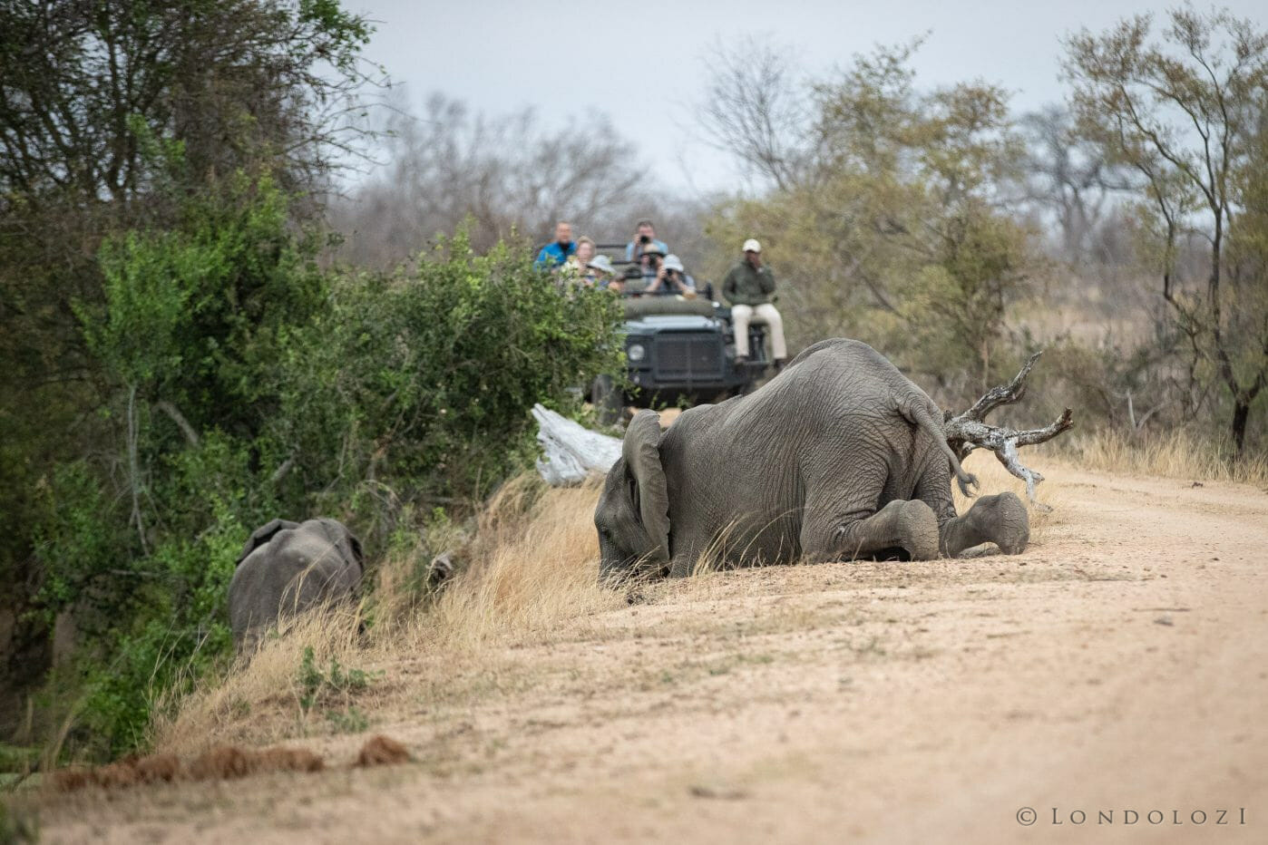 Elephant Land Rover