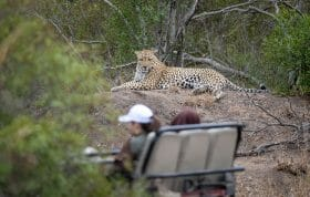 Senegal Bush Leopard Guests Land Rover