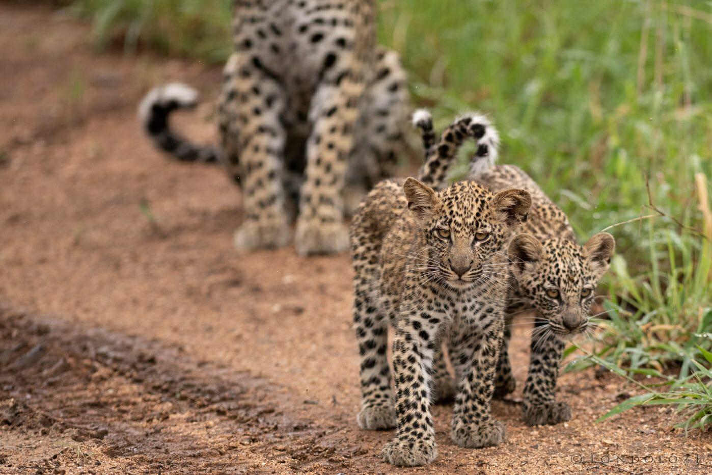 Ximungwe Cubs