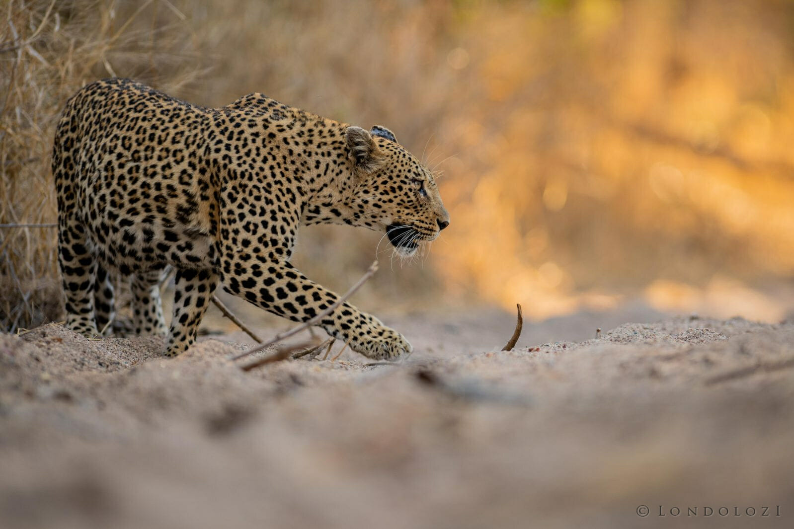 Mashaba In The Mash River Jt 300mm 1 320 2.8 Iso320 1 Of 1