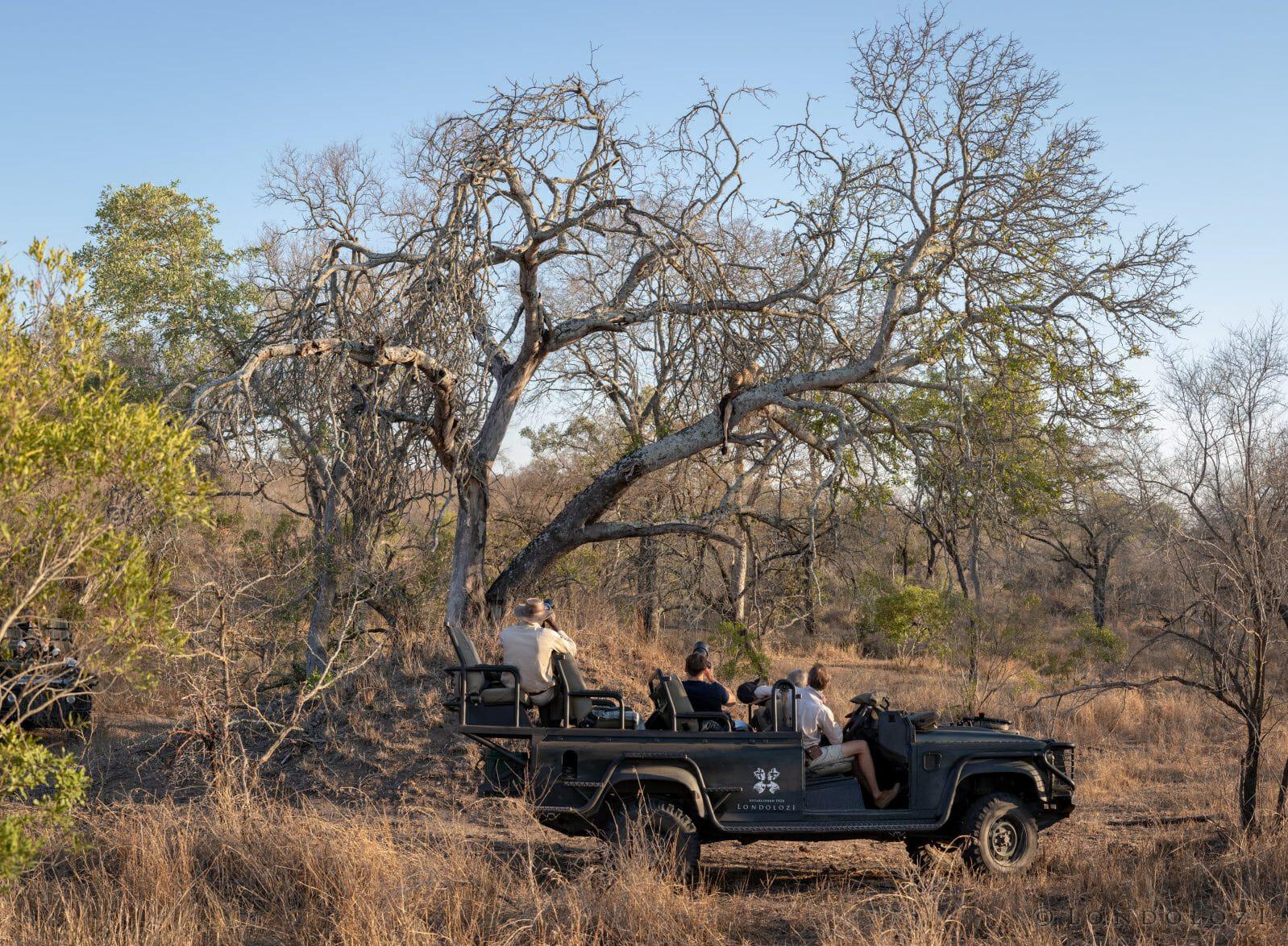 Ximungwe Leopard Land Rover
